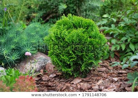 verde · abstrato · fresco · árvore · natureza · mundo - foto stock © oleksandro