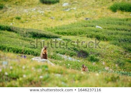 女性 小さな 高山 草原 自然 山 ストックフォト © Antonio-S