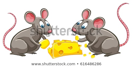 two rats eating cheese stock photo © bluering