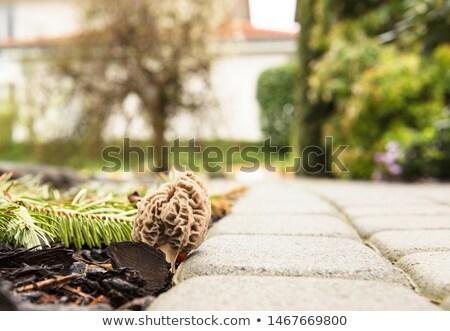 kory · biały · zestaw · drewna · tle - zdjęcia stock © qingwa