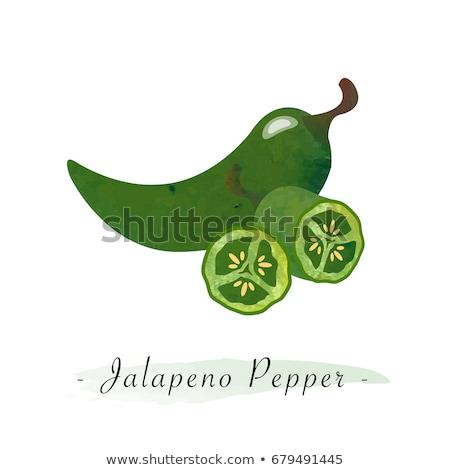 watercolor illustrations of jalapeno pepper stock photo © sonya_illustrations