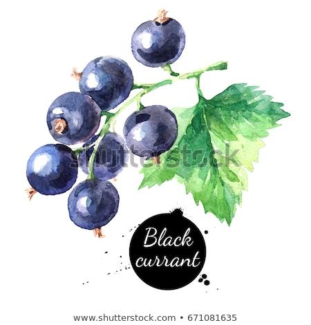 Vízfesték illusztráció fekete ribiszke levél festék Stock fotó © Sonya_illustrations