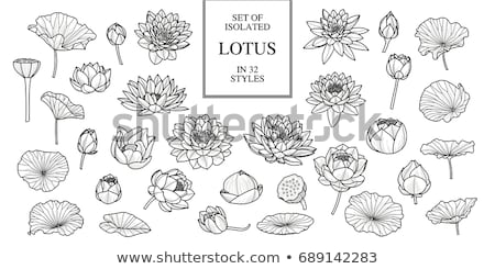 hand drawn lotus flowers Stock photo © frescomovie