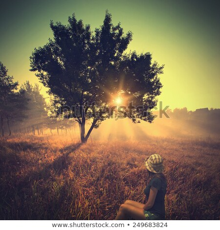 lonely tree in meadow with vintage look stock photo © sandralise