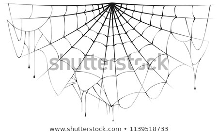 Torn semicircular spider web over white background Stock photo © orensila