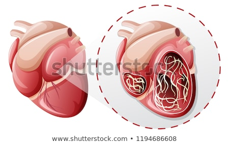 magnified heart worm concept Stock photo © bluering