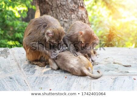 Małpa obraz wiosną lasu liści sztuki Zdjęcia stock © clairev