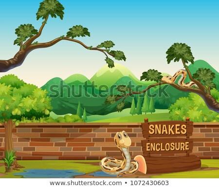 Stock fotó: állatkert · jelenet · kígyók · nap · idő · illusztráció
