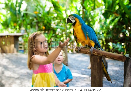 Happy Macaws in a Zoo Stock photo © colematt