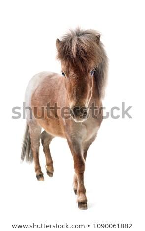 Miniatűr lovak feketefehér Polaroid átutalás ló Stock fotó © iofoto