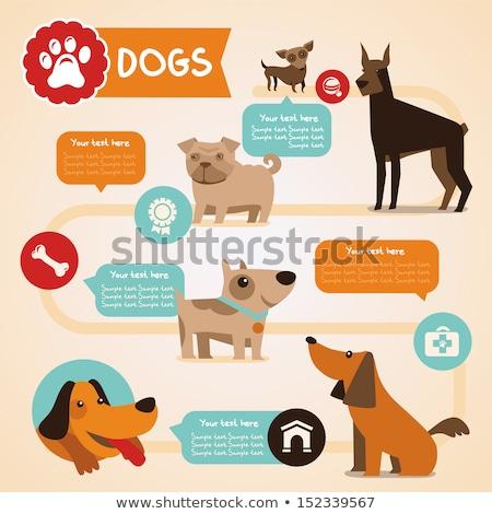 собака · иллюстрация · природы · фон · искусства - Сток-фото © colematt