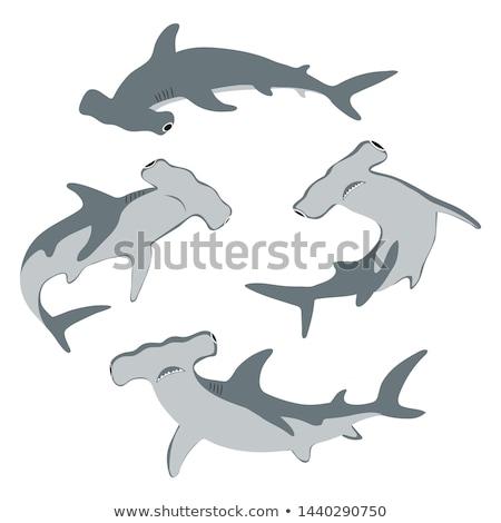 vektor · szett · cápa · hal · tenger · terv - stock fotó © olllikeballoon