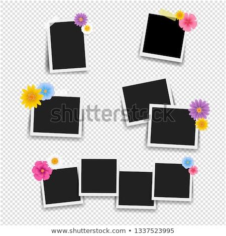 Stock fotó: Fényképkeret · virágok · nagy · szett · átlátszó · gradiens