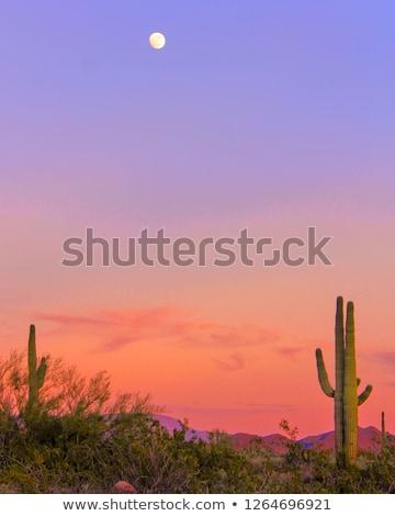 Kaktus pustyni wygaśnięcia ilustracja charakter ziemi Zdjęcia stock © adrenalina