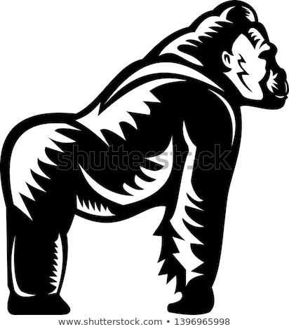 Stok fotoğraf: Goril · yandan · görünüş · Retro · stil · örnek