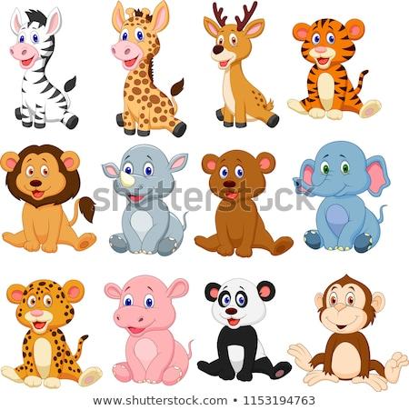 Szett állatkert állat ül illusztráció terv Stock fotó © bluering