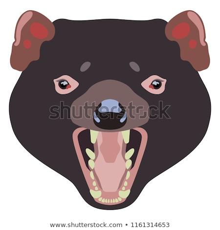 Tasmanian Devil Head Mascot Black and White Stock photo © patrimonio