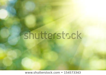 Groene abstract ontwerp internet zon Stockfoto © FransysMaslo