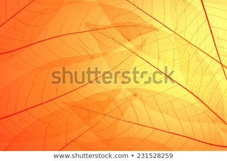 transparent leaf on orange background Stock photo © Zela