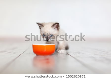 Pequeno gatinho bebê gato olhos verdes olho Foto stock © simply