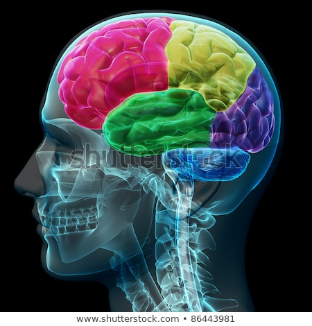colored sections of a male human brain x ray concept stock photo © digitalstorm
