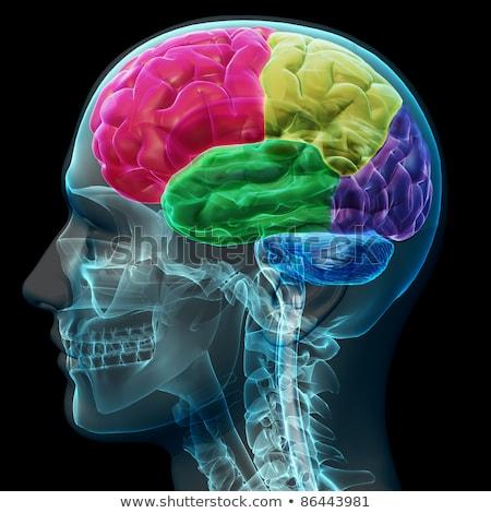 мужчины рентгеновский больницу череп Сток-фото © digitalstorm