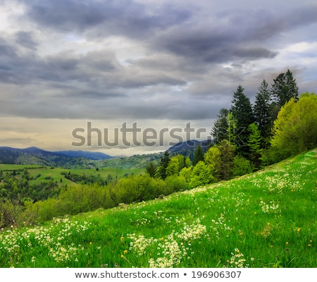 forest under rain stock photo © petrmalyshev