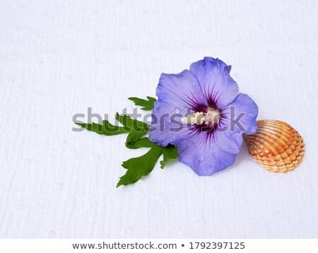 Сток-фото: фиолетовый · закрывается · лепесток · капли · воды · студию · фотографии