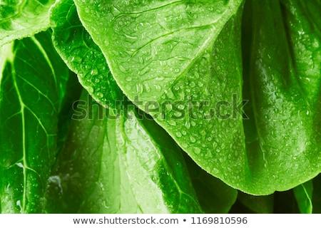 fresh green lettuce salad closeup stock photo © ozaiachin