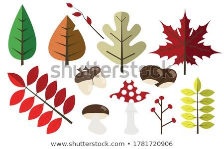 falling leafs icon set stock photo © wad
