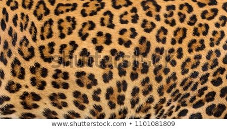 Animal fur texture Stock photo © aetb