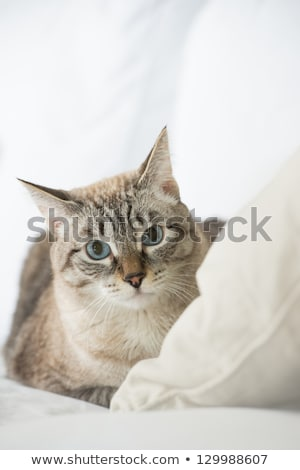 Stock fotó: Cute Tabby Cat At Home - Laying On Sofa And Looking Wary