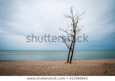 バルト海 · 海岸 · ラトビア · ビーチ · 空 · 水 - ストックフォト © billperry