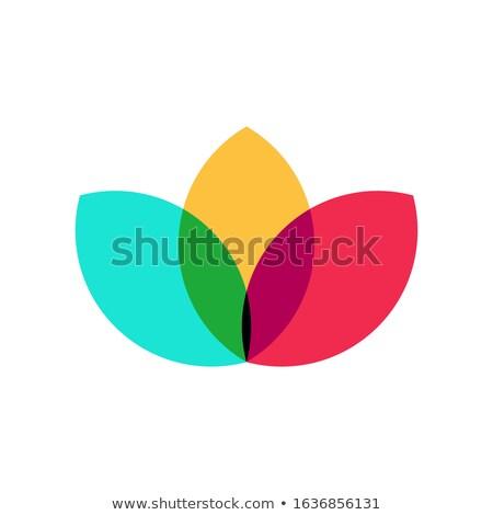 zachte · heldere · witte · Geel · ander · planten - stockfoto © nelosa