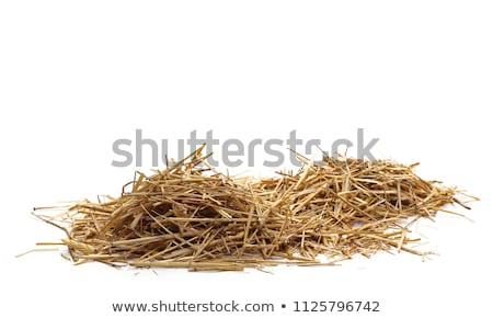 barley straw Stock photo © jarin13