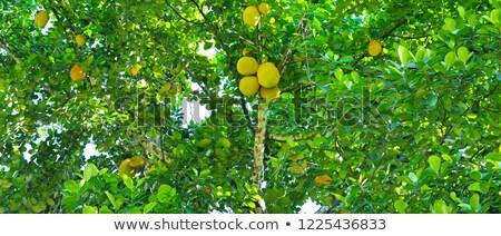 Creciente árbol alimentos hoja frutas Foto stock © dinozzaver