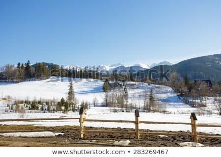 Iarnă peisaj suburban frumuseţe pădure natură Imagine de stoc © marekusz