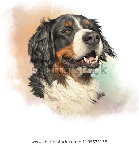 水彩画 実例 肖像 犬 手 顔 ストックフォト © artibelka