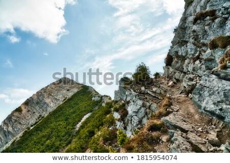Alpok kilátás fa tájkép hegy nyár Stock fotó © w20er