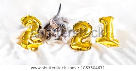 Capodanno gattino cute bianco gattino lollipop Foto d'archivio © OliaNikolina
