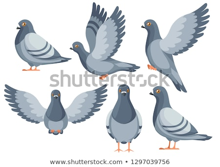 Pigeon, Color Illustration Stock photo © Morphart