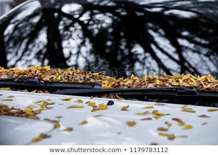 ősz citromsárga levelek autó szélvédő absztrakt Stock fotó © GeniusKp