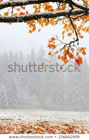 осень · пейзаж · первый · снега · гор · туман - Сток-фото © kotenko