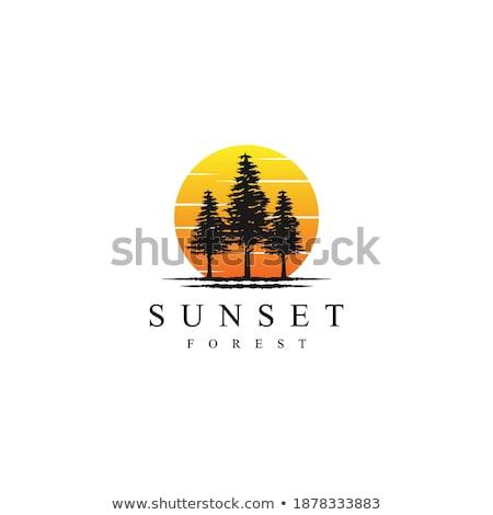 Cyprys wzgórza wygaśnięcia Jeleń trawy Chmura Zdjęcia stock © pictureguy