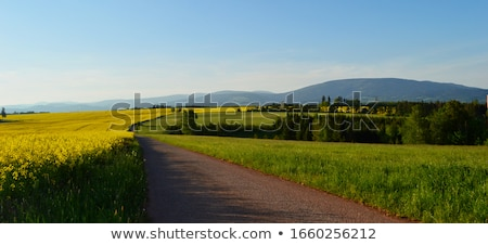 field with a path czech republic stock photo © phbcz