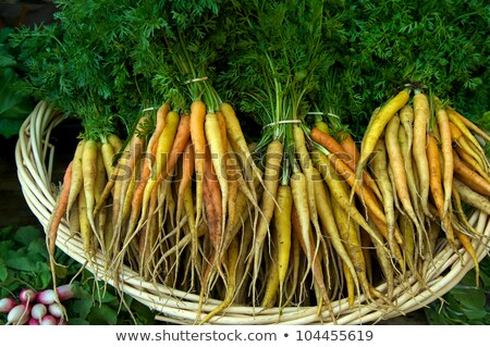 Healthy bunch of multicolored carrots Stock photo © ozgur