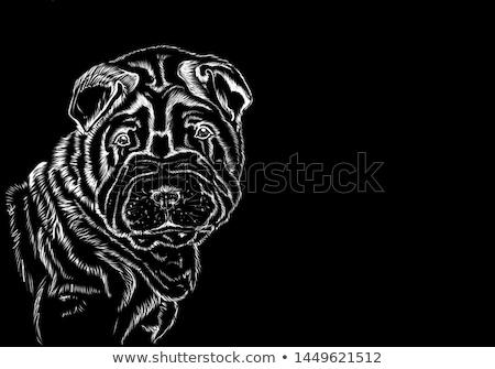 Shar pei portrait in the dark background Stock photo © vauvau