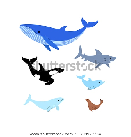 акула современных вектора набор Cartoon Сток-фото © Decorwithme