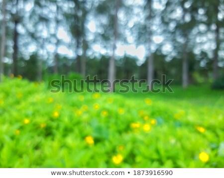 Mooie landschap boom gazon bloemen Stockfoto © yelenayemchuk