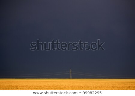 darkened skies behind power tower and wheat field stock photo © pictureguy